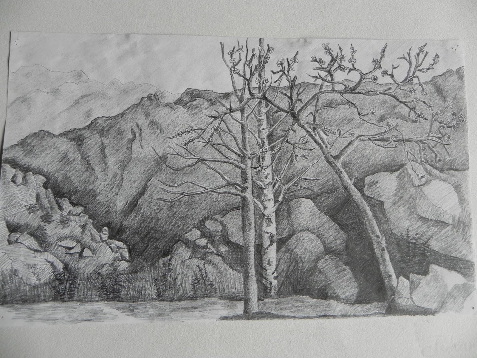 Graciela Koch Dibujos paisajesnaturaleza muertadibujos