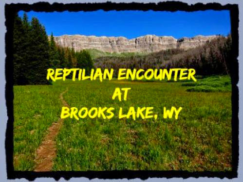 Reptilian Encounter At Brooks Lake Wy