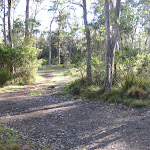 Driving into Devils Hole camping ground