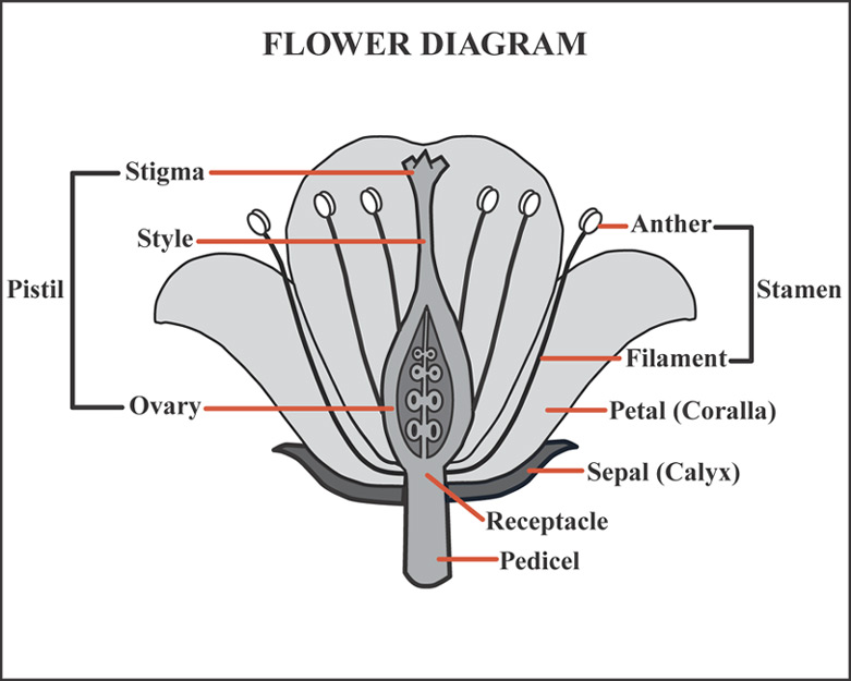 Amysblog Plantae