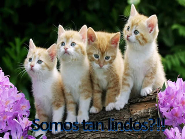 Postales de gatitos tiernos