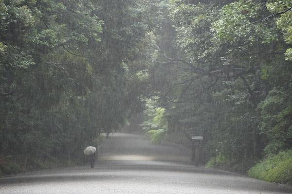 颱風天的明治神宮