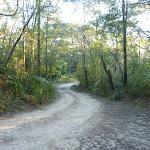 Perimeter Trail near Terrey Hills (307853)