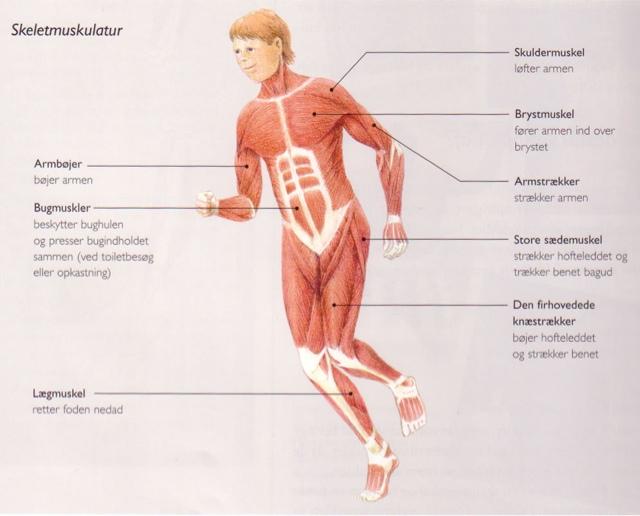 tre vanligaste grundämnena i kroppen