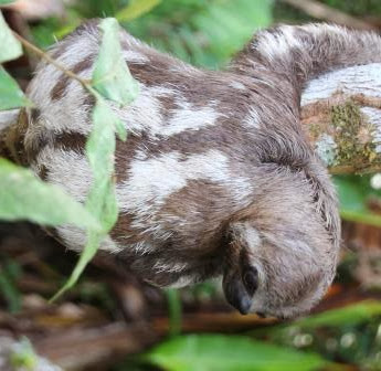 Think you know about Sloths? Think again!