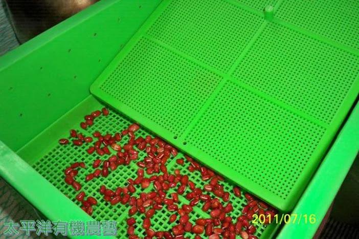 紅豆芽培育