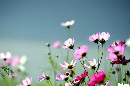 ảnh những cánh hoa xuân