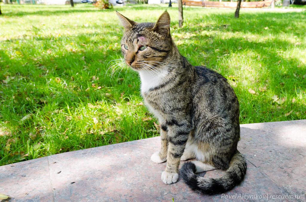 Кот, Samyang 14mm
