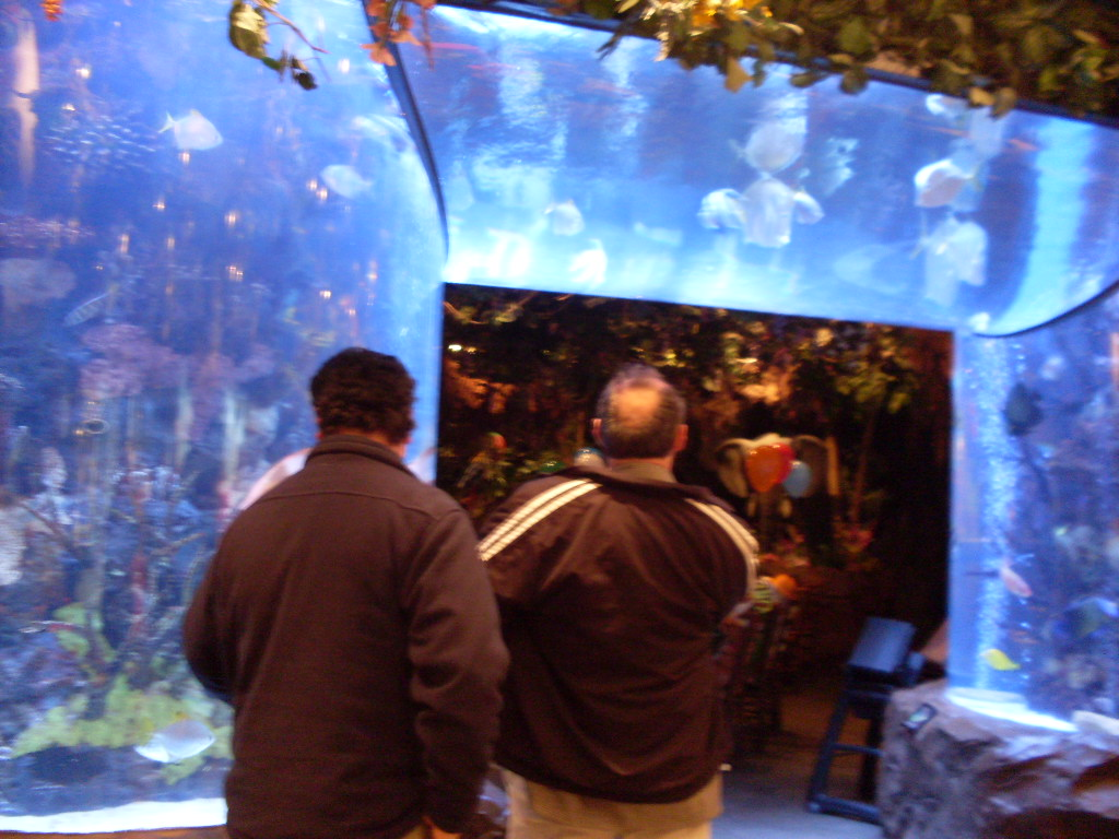 Fish aquarium in canada - Tropical Fish Aquarium Rain Forest Cafe Yorkdale Toronto Canada Harry Clyde Photo Linda Randall