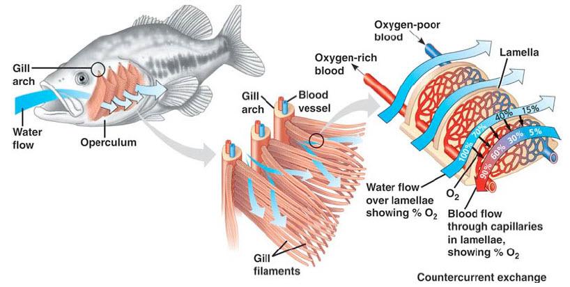 Anatomía y Disección de un Pez | Melken en la Ciencia