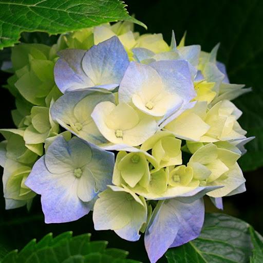 Hoa Bao Photo 11