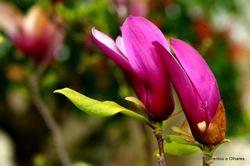 A primavera chegará