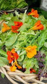 Some of the offerings at the Portland Farmers market on Saturdays at PSU - salads