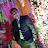 Koushik Saha avatar image