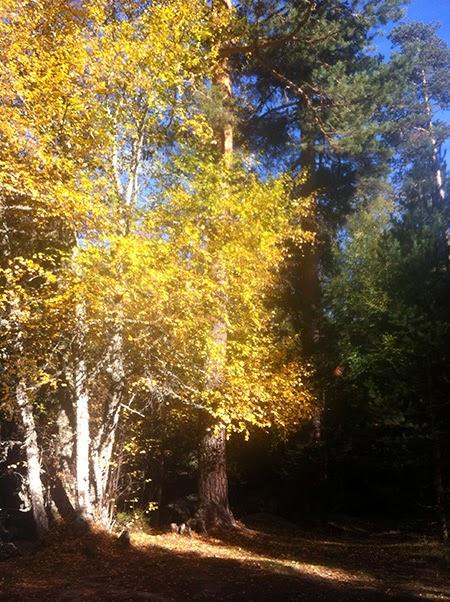 Otro paseo en bici por el valle del Lozoya. Sábado 9 de noviembre 2013 ¿Te apuntas?