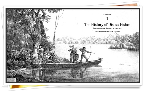 history-discus-fishes