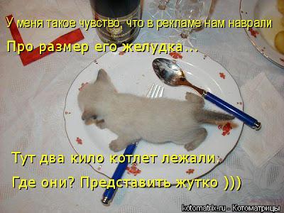 Кошачьи хитрости