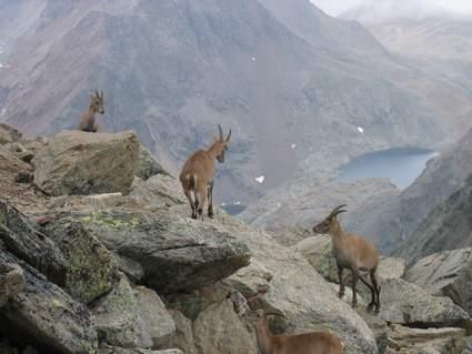 Company on the mountain