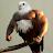Arie Gilbert avatar image