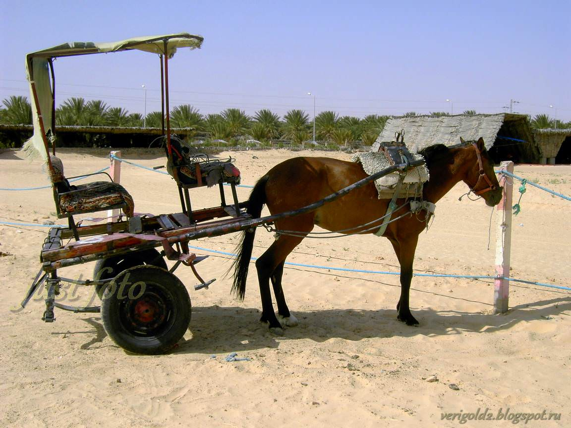 Катание по Сахаре