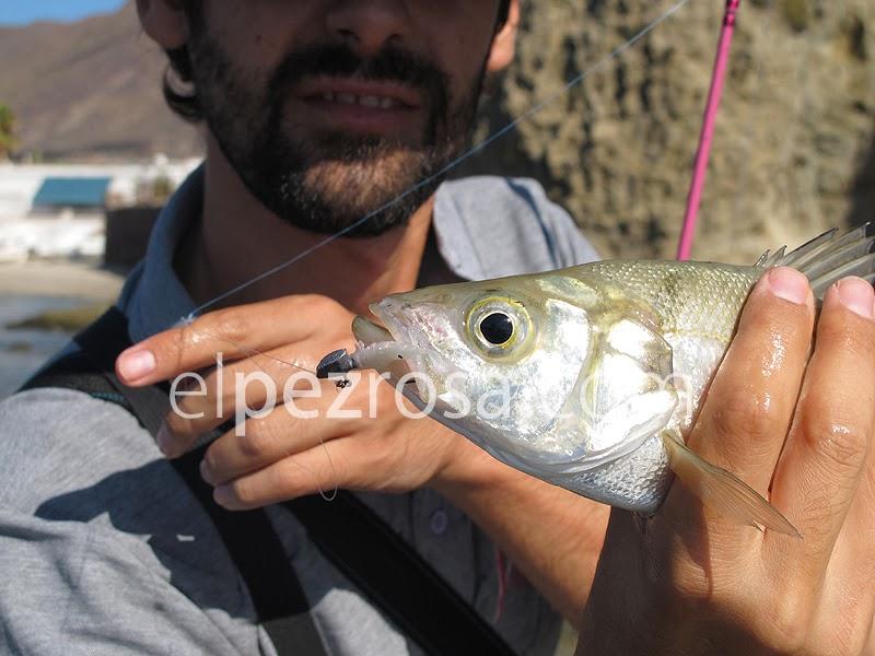 Nuevas chuches de rockfishing  Captura_gambita
