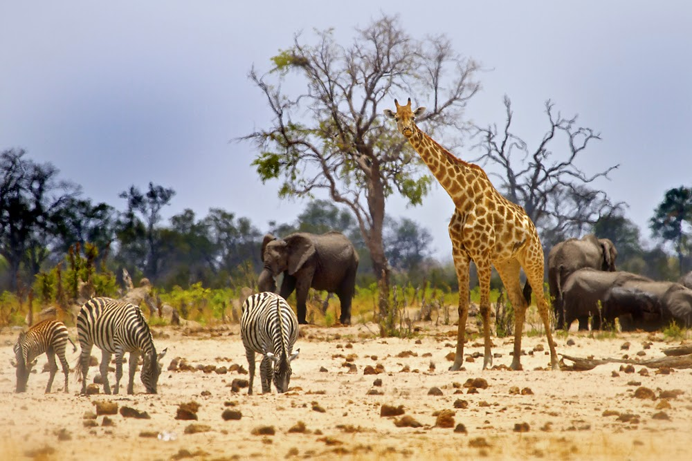 wildlife sightseeing in African Safari