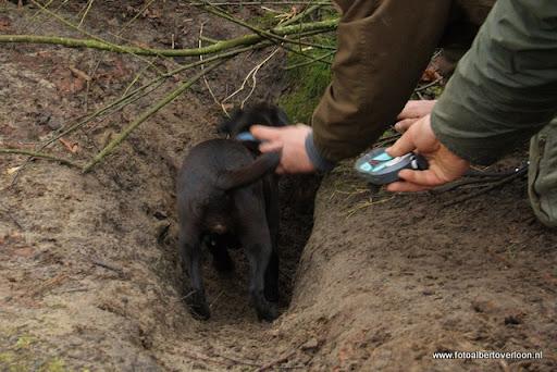 vossenjacht in de Bossen van overloon 18-02-2012 (61).JPG