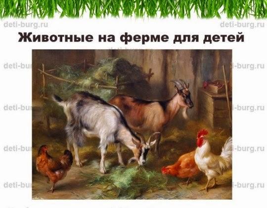 Тематическое занятие Животные на ферме