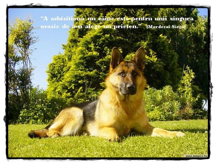 citate caini Have you laughed today ?: Citate despre câini citate caini