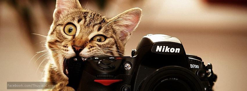 Ảnh bìa chú Mèo