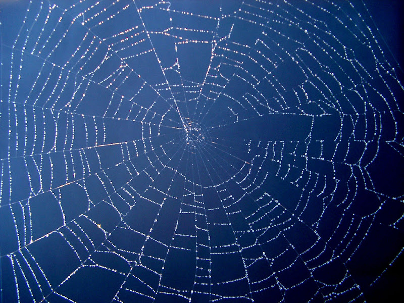 Spiders Web by Steve Gibson