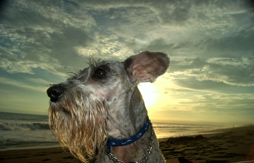 Hablemos de perros p gina 3 for Hablemos de piscinas