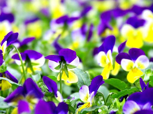 Mooie_bloemen_achtergrond.jpg
