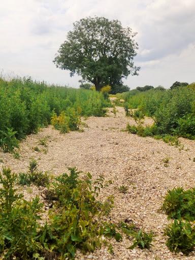 Shell path