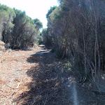 Wide sandy trail (172077)