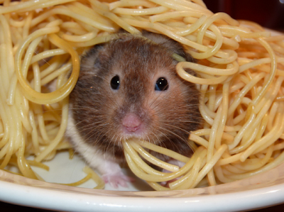 hamster%2Bwith%2Bpasta.png