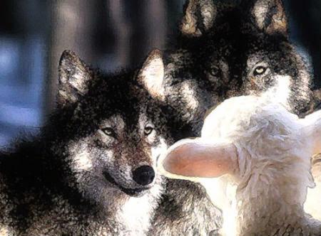 vilki jēra ienaidnieki