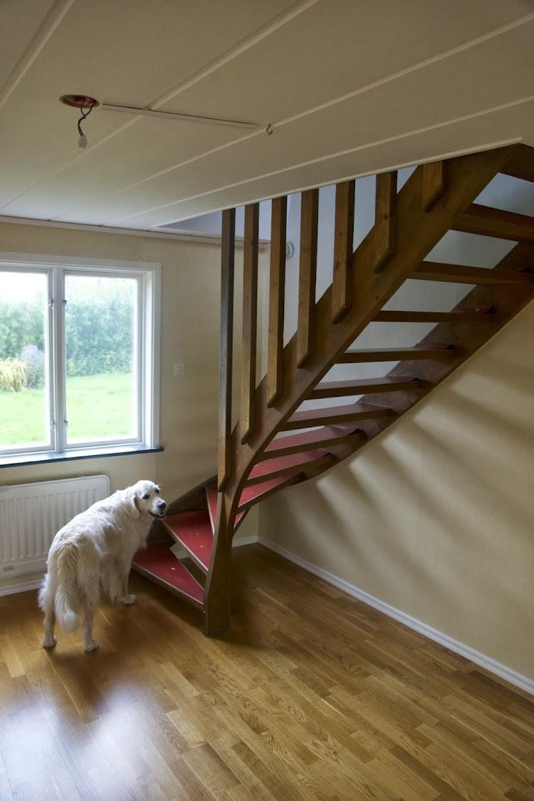 Hemmet - Göra trappa hundvänligare (och snyggare)