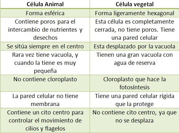 Son las diferencias entre las celulas eucariotas animal y for Diferencia entre halla y living room