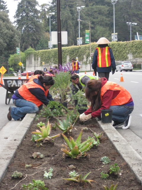 photo of people working planting on a median strip