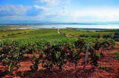 Sulcis Iglesiente: L'autunno profuma di mosto e vino