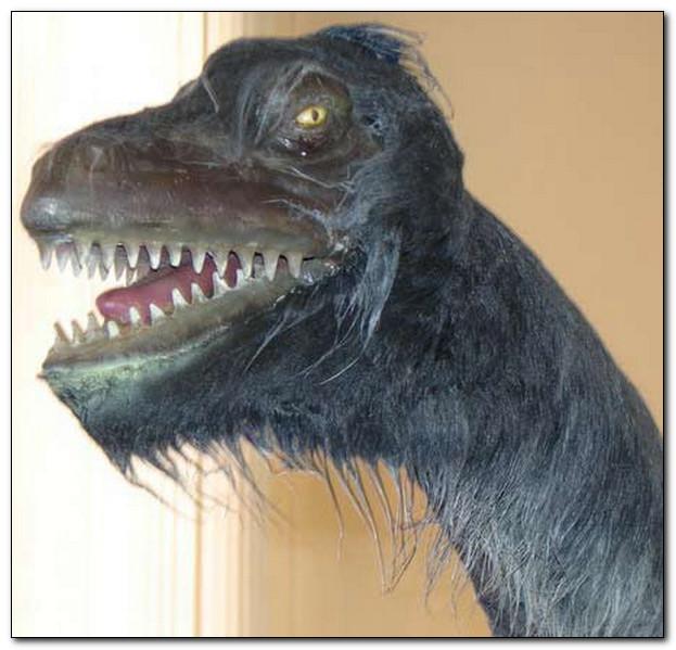Животное существо из озера Ладога