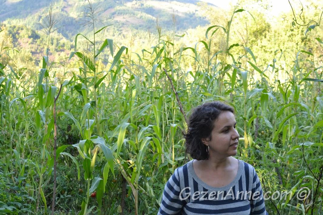 mısır bahçesinde