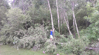 6-7 trees down in the storm
