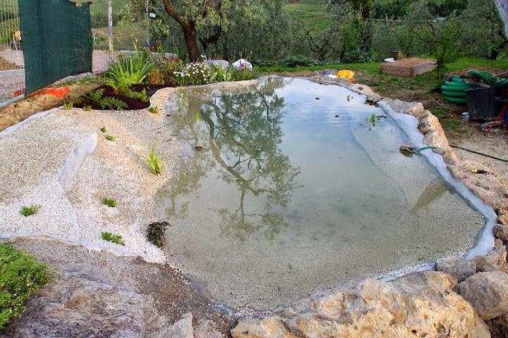 Laghetto piante palustri autoctone for Piante laghetto