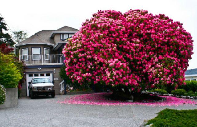 1_amazing-trees-1.jpg