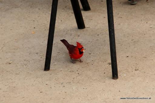 Burgers' Zoo in Arnhem 04-01-1012 (16).JPG