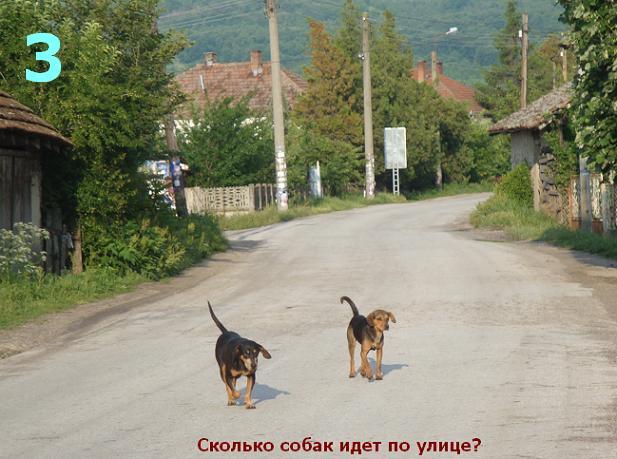 собаки гуляют