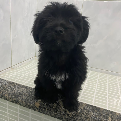 Jeferson Pinheiro Photo 11