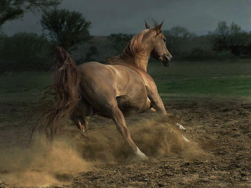espectaculares fotos de caballos
